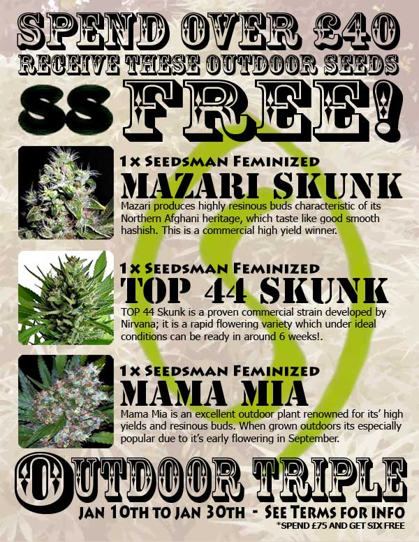 Sensible Triple Free Seeds Outdoor Sensible Seeds