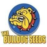 Bulldog Seeds