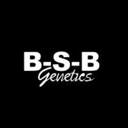 BSB Genetics Seeds