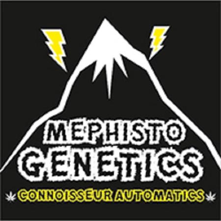 Mephisto Genetics Seeds