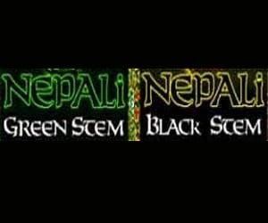 Original Nepali Seeds