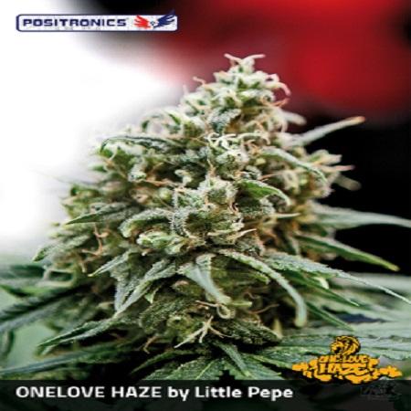 Positronics Seeds One Love Haze Feminized