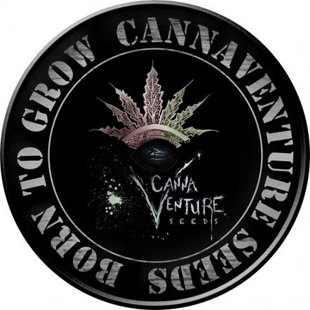 CannaVenture Seeds 425 Regular