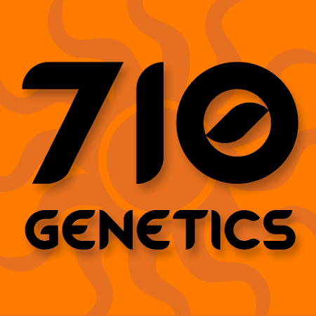 710 Genetics Seeds G13 Hashplant Feminised