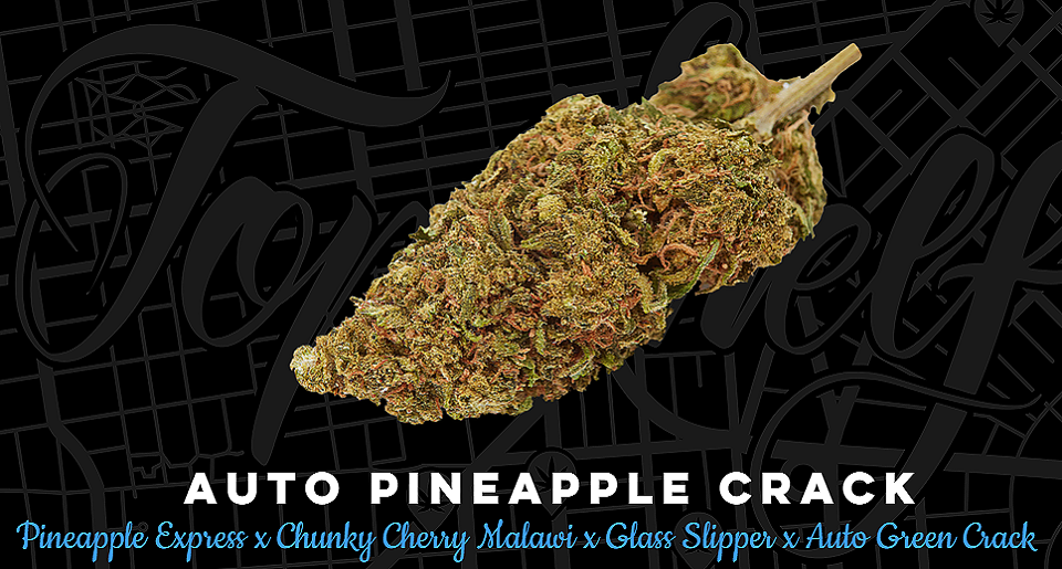 Top Shelf Elite Seeds Auto Pineapple Crack Feminized