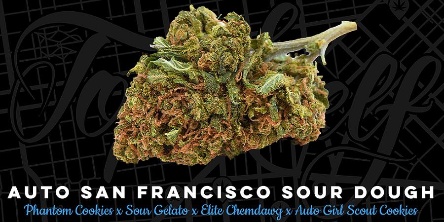 Top Shelf Elite Seeds Auto San Francisco Sour Dough Feminized