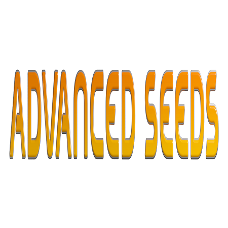 Do-Si-Dos #4 - Regular - Advanced Seeds