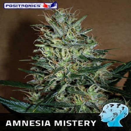 Positronics Seeds Amnesia Mistery Feminized