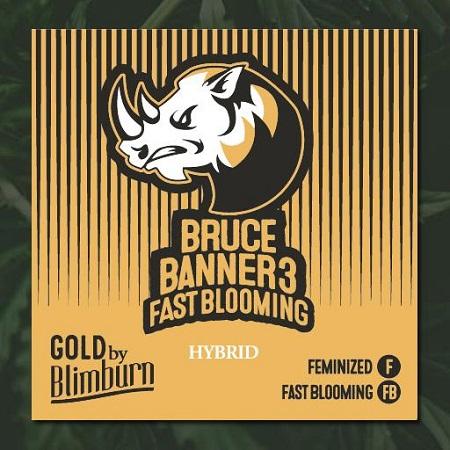 Bruce Banner #3 Fast - Feminized - BlimBurn