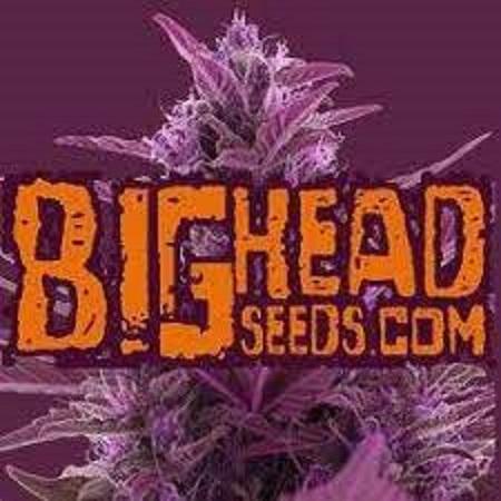 Watermelon Zkittelz - Feminized - Big Head Seeds