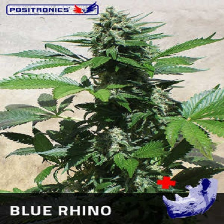 Positronics Seeds Blue Rhino Feminized (PICK N MIX)