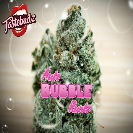 Bubble Runtz Auto - Feminized - Tastebudz