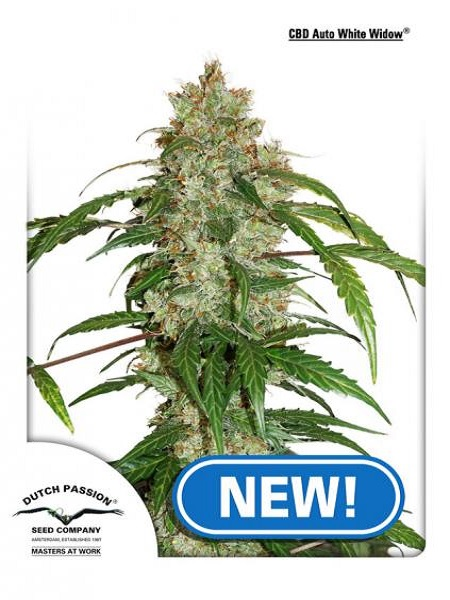 Dutch Passion Seeds CBD Auto White Widow Feminized