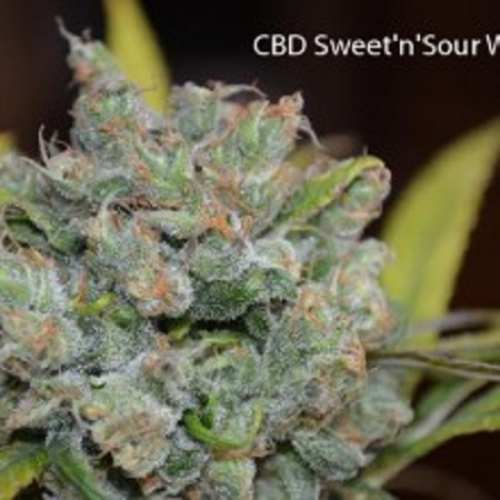 CBD Crew Seeds CBD Sweet 'n Sour Widow Regular