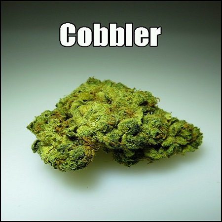 Hemp CBD Seeds Cobbler Feminized