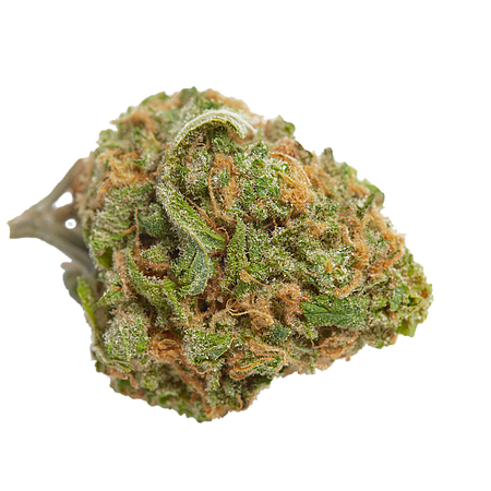 Top Shelf Elite Seeds Gorillagasm Feminized (PICK N MIX)