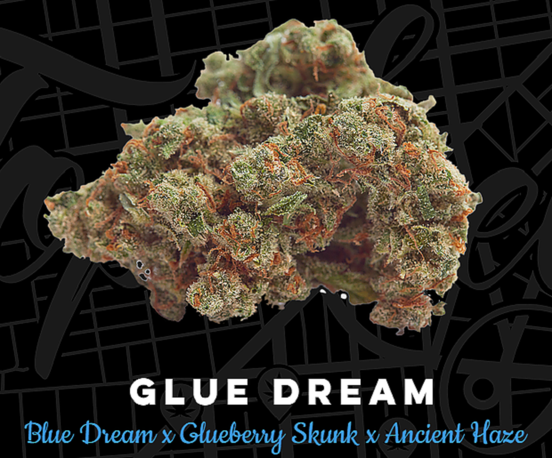 Top Shelf Elite Seeds Glue Dream Feminized