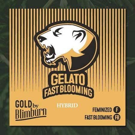 Gelato Fast - Feminized - BlimBurn