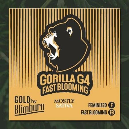 Gorilla Glue #4 Fast - Feminized - BlimBurn