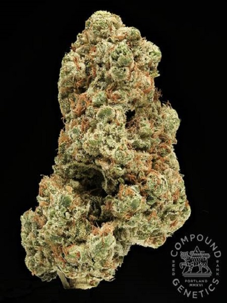Compound Genetics Seeds Glasswork O.G. Regular