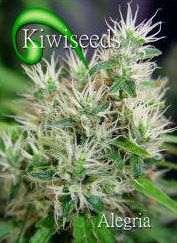 Kiwi Seeds - Alegria Regular
