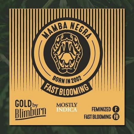 Mamba Negra Fast - Feminized - BlimBurn