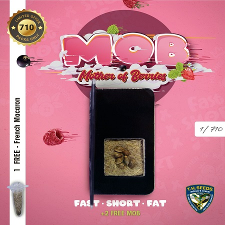 MOB - Feminized - T.H.Seeds