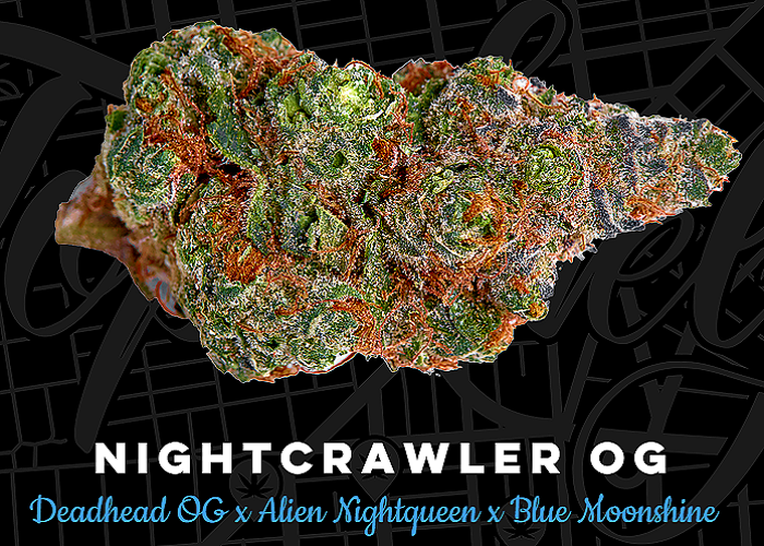 Top Shelf Elite Seeds Nightcrawler O.G. Feminized