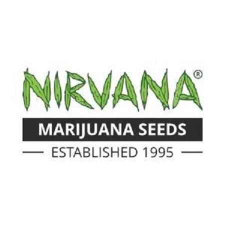 Northern Lights Auto - Feminized - Nirvana Seeds