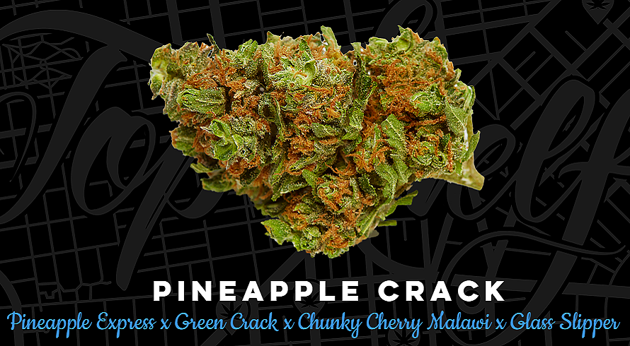 Top Shelf Elite Seeds Pineapple Crack Feminized