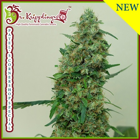Dr Krippling Seeds Patel's Cornershop Special Feminized (PICK N MIX)
