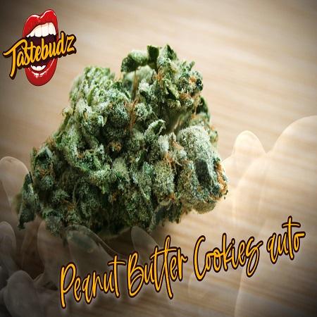 Peanut Butter Cookies Auto - Feminized - Tastebudz