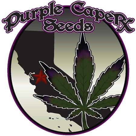 Magic Tonic's Web - Regular - Purple Caper Seeds