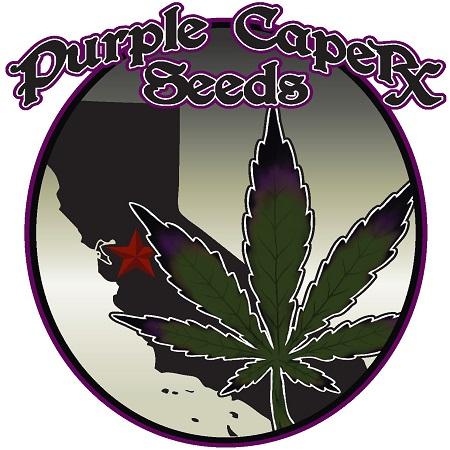 Grape OG - Feminized - Purple Caper Seeds
