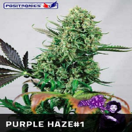 Positronics Seeds Purple Haze #1 Feminized (PICK N MIX)