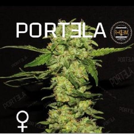 R-KIEM Seeds Portela Feminized
