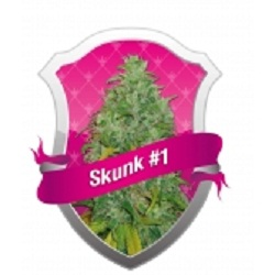 Royal Queen Seeds Skunk XL Feminized (PICK.N.MIX)