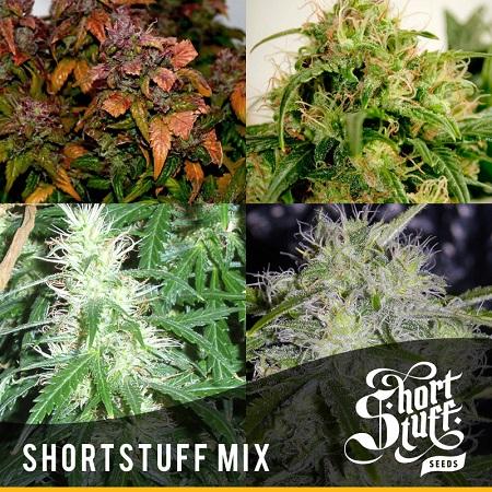 Mix - Regular - Shortstuff Seeds