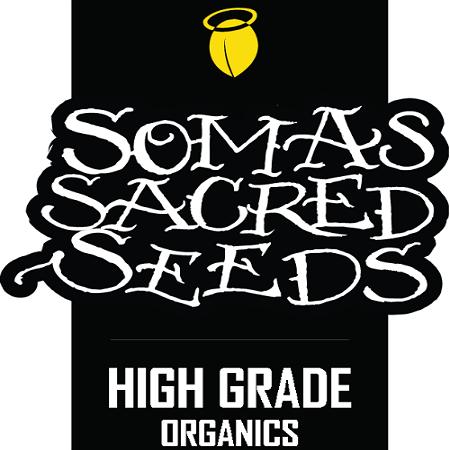 So Mint Cookies - Feminized - Soma Seeds