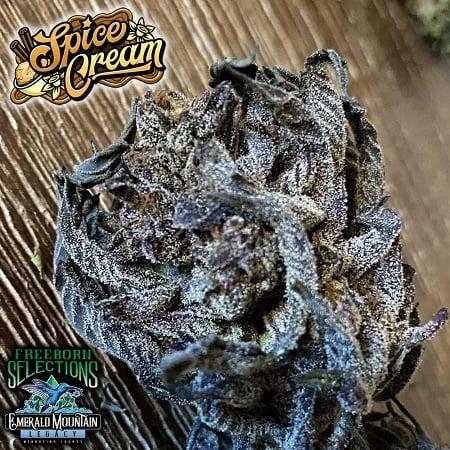 Spice Cream - Regular - Emerald Mountain Legacy Seeds