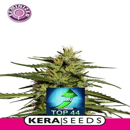 Top 44 - Feminized - Kera Seeds
