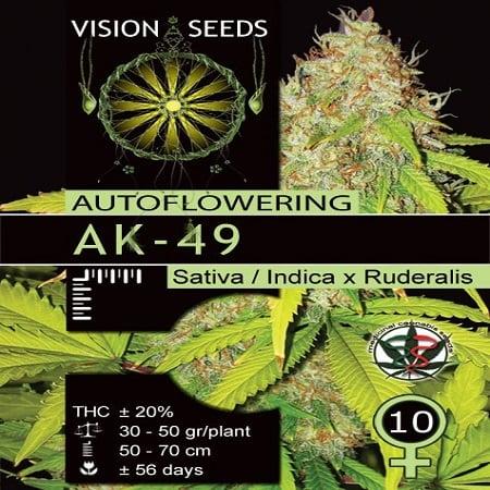 Vision Seeds AK49 Auto Feminized