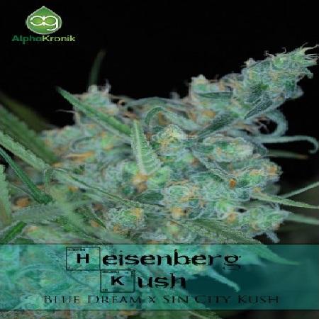 AlphaKronik Genes Seeds Heisenberg Kush Regular