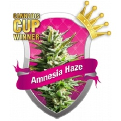Royal Queen Seeds Amnesia Haze Feminized (PICK N MIX)