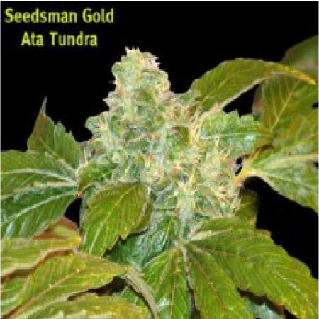 Seedsman Seeds Ata Tundra Regular