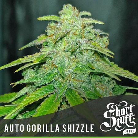 Shortstuff Seeds Auto Gorilla Shizzle Feminized