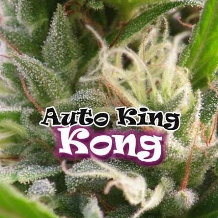 Dr Underground Seeds Auto King Kong Feminized