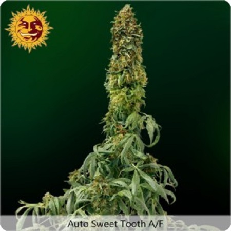 Barney's Farm Seeds Sweet Tooth Auto Feminized
