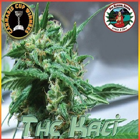 Big Buddha Seeds The Kali Feminized