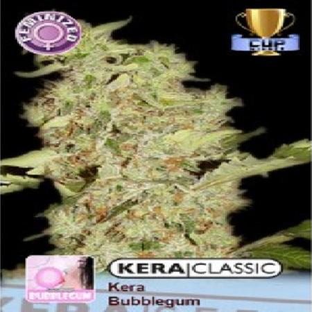 Kera Seeds Bubblegum Feminized